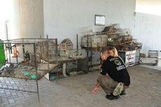 Así Somos: Policía Ambiental secuestró 280 aves silvestres