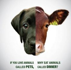 If you love animals...why eat animals?