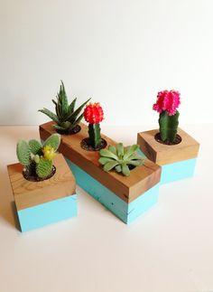 En maderas con cactus
