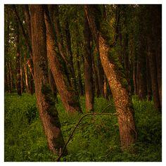 In meinem neuen Video entführe ich euch in einen wunderbaren Auwald an der Donau in Oberösterreich.  Wandern, Fotografieren und wie ich dabei das Licht nutze - darum geht es. Ich freue mich, wenn ihr reinschaut. Plants, Hiking, Woodland Forest, Landscape, Plant, Planets
