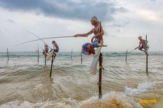 Galle, Sri Lanka'da Sırık Balıkçıları  Galle kenti Sri Lanka'nın başkenti Colombo'ya 120 km mesafede, adanın güney batı ucunda yer alan bir şehir. Sri Lanka seyahati sırasında bizim buraya uğramaktaki amacımız özellikle ünlü Magnum fotoğrafçısı Steve McCurry'nin balıkçılar fotoğrafındaki gibi manzaralar yakalayabilmekti. Galle, Sri Lanka'da sırık balıkçıları bulabileceğiniz en iyi mekanlardan biri; ama sadece bununla da sınırlı değil... Steve Mccurry, Sri Lanka, Camel, Animals, Animaux, Camels, Animal, Animales, Bactrian Camel