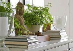 interior decor plants - Google Search