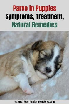 Alarming Signs That Your Pet Is Suffering From Parvo Try These Home Remedies And Help Your Pet Get Rid Of Parvo Home R With Images Home Remedies Parvo Remedies