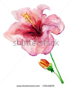 Hibiscus Flower. watercolor painting. - stock photo