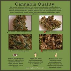 How to judge cannabis quality?