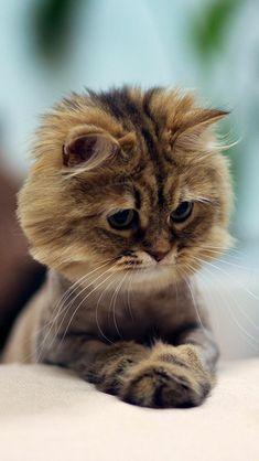 Omg!!!! Too cute