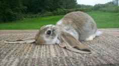 The top 10 most popular rabbit breeds