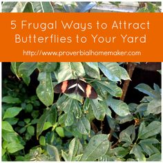 5 Frugal Ways to Attract Butterflies to Your Yard