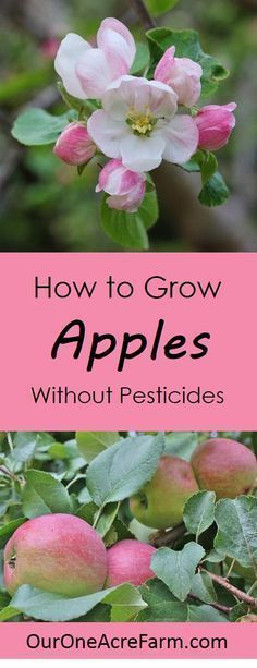 How to Grow Apples without Pesticides | One Acre Farm