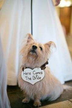Make your pup part of the wedding with this sign.