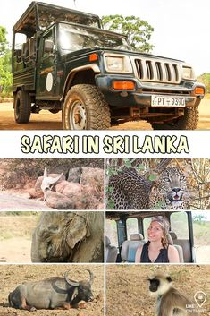 Romantic Vacations, Romantic Travel, Sri Lanka, Safari, Sardinia Italy, Las Vegas Strip, Italy Vacation, Honeymoon Destinations, Places To Travel