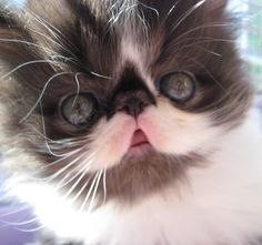 Cute Fluffy Cat - Aww!