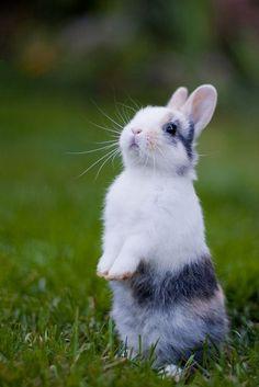 cute bunny rabbit standing UP!