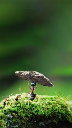 Ant Spirit Is Strong Hard Struggle Enterprise Background Material Cool Pictures For Wallpaper, Love Wallpaper Backgrounds, Galaxy Phone Wallpaper, Wallpaper Nature Flowers, Beautiful Landscape Wallpaper, Scenery Wallpaper, Buddha Wallpaper Iphone, Beautiful Nature Pictures, Beautiful Nature Scenes