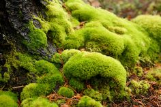 I just fucking love moss.