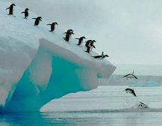 Adelie penguin group dive in Antartica Penisula Beautiful Birds, Beautiful World, Animals Beautiful, Beautiful Pictures, Wild Life, Animals And Pets, Cute Animals, Fauna Marina, Ocean Life