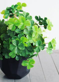 Looking for artificial wedding greenery? Check out this adorable four-leaf clover bush in two tone green. Luscious green 4-leaf clovers will make great fillers in your DIY Irish wedding bouquets and S