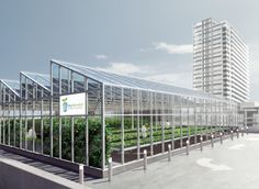 Rooftop Greenhouse | Rooftop Greenhouse (Flagship Project) | Sky Harvest