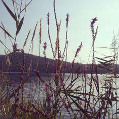 Il #lago di #monate sempre #suggestivo www.bedandbreakfast-iduenoci.it