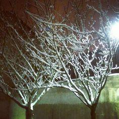 Bonjour Nancy ! Tous les jours à 10 h une nouvelle photo de la ville de Nancy - Ville de Nancy sous la neige - Silhouettes urbaines nocturnes