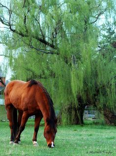 Bay by the Willow Tree by gypsymarestudios, via Flickr
