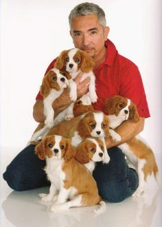 Cesar Milan with best breed ever. Cesar Milan is the BEST too!Cavalier King Charles My Dog Owns Me Kat Morris Your Property Matters LLC Perro Cocker Spaniel, Spaniel Puppies, Cesar Milan, Cute Puppies, Cute Dogs, Cavalier King Charles Spaniel, Baby Animals, Cute Animals, Mundo Animal