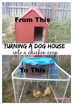 How to Convert an old dog house into a useable chicken coop~The Homesteading Hippy #chickens #smallflock #backyard chickens