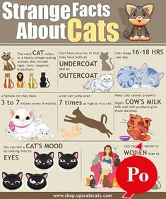 cat litter cat service best cat pets cats broadway tickets dog forum dog training school home cooked food diet healthy diet Fun Facts About Cats, Cat Facts, Facts About Kissing, Fun Animal Facts, All About Cats, Cute Kittens, Cats And Kittens, Kitty Cats, Foster Kittens