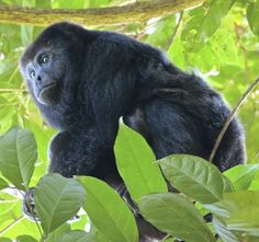The Monkey River Tour offers plenty of incredible wildlife attractions guaranteed to entertain the whole