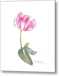 Delicate Pink Tulip Metal Print By Pat Yager