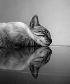 Beatrix Jourdan :: [reflected cat]