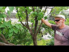Cięcie dużego Lilaka - YouTube Mens Sunglasses, Youtube, Gardening, Style, Tree Structure, Lawn And Garden, Swag, Men's Sunglasses, Youtubers