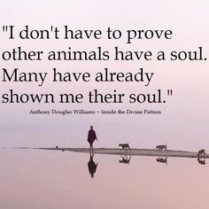 """I don't have to prove other animals have a soul. Many have already shown me their soul."" - Anthony Douglas Williams 