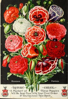 John Lewis Child's Spring catalogue of seeds, bulbs and plants, 1890 back cover