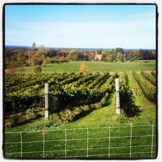 Coffin Ridge Winery, Meaford, ON Canada