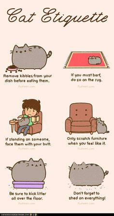 Cat Etiquette....