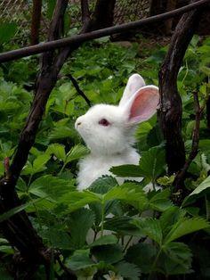 Garden bunny