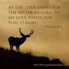 25 Best As The Deer Panteth! images in 2015 | Psalm 42