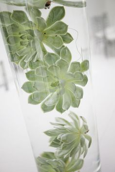 submerged succulents!! Love this! Thank you cousin for posting things. :)