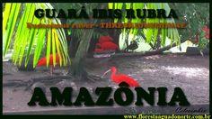 Amazônia - Aves Aquáticas - Guará - Eudocimus ruber - Celcoimbra - FAN