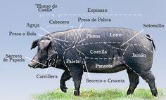 Partes del cerdo