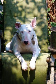 My summer throne by helenpriem, via Flickr