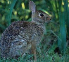 Rabbit Hunting: Tips to Increase Success