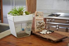 DIY Aquaponic System - In office trial at MOTHER EARTH NEWS