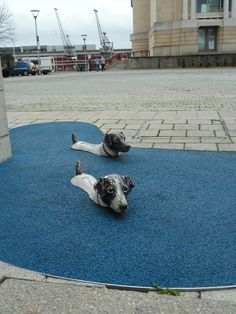 Swimming doggy street sculpture at Bristols harbour