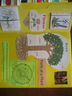 Pictures and description of our lapbook on plants. | I Choose Joy!