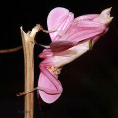 mimikry orchideen - Google-Suche