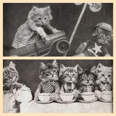 Kittens wearing their best clothes! Animal Humour, Kittens, Cool Outfits, Teddy Bear, Toys, Funny, Animals, Clothes, Cute Kittens
