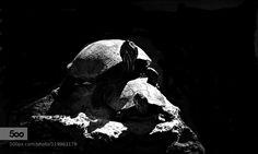 tortoises by fredmatos