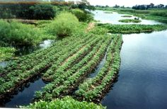 Floating gardens | Food and agriculture | Practical Action